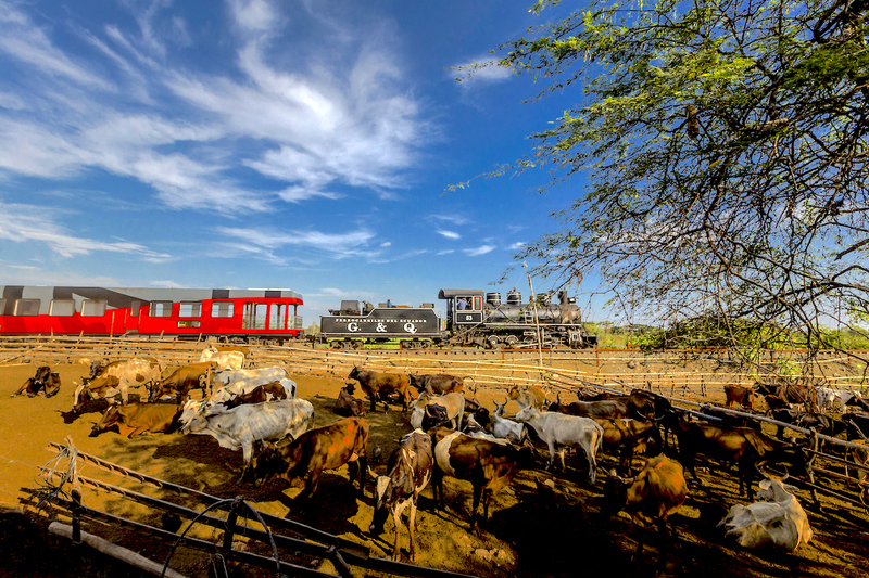 Tren crucero across the coastal plains