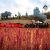 Steam locomotive and quinoa fields near riobamba